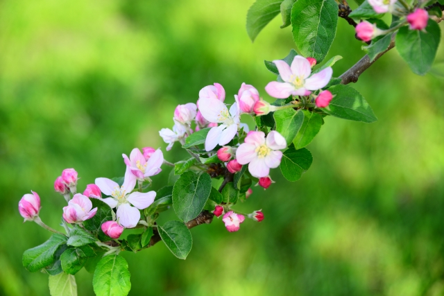 24japanese-season-apple-bagel-2016-2