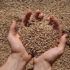 famous-brand-of-domestic-wheat-2