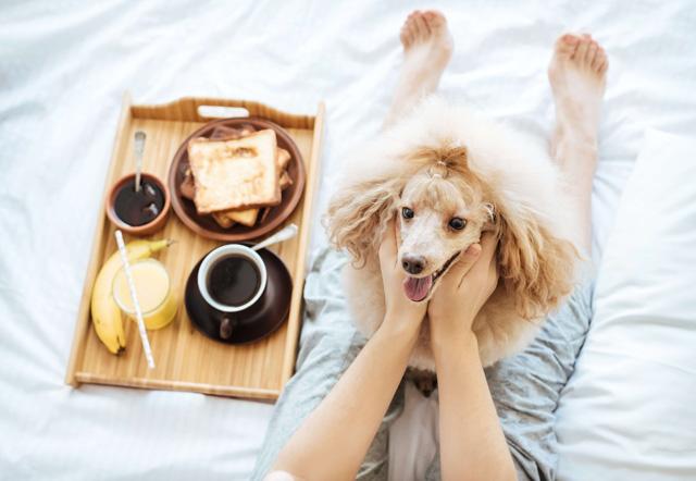 犬のおやつに食パンやパンの耳、菓子パンをあげても大丈夫?犬とパンの関係